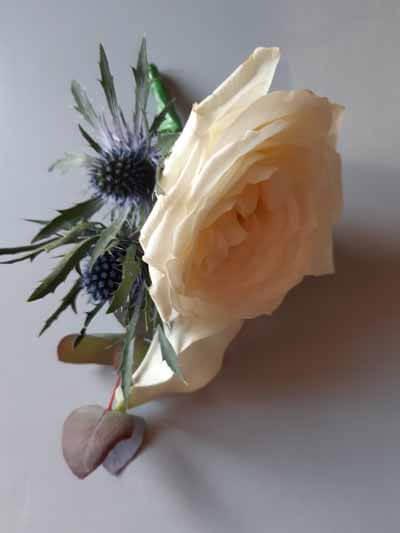 Weddings - Buttonhole - Garden Rose, Blue Thistle & Eucalyptus